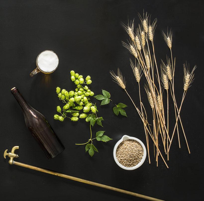 beer still life - barley - green fresh hop