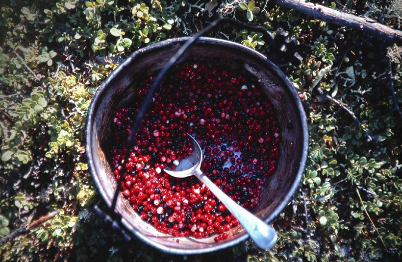 forest fruits siberia taiga Kodar Russia