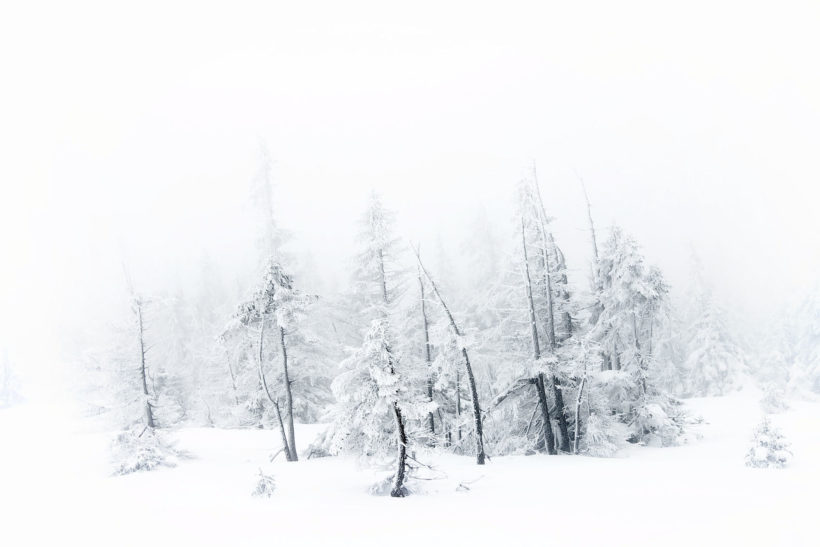 winter forest with snow and frost at Krkonose